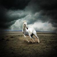 White Horse by kiaStaal