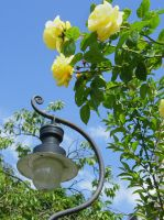 Yellow Lampost Bloom by Queenselphie