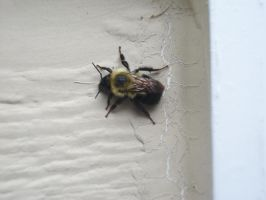 Bumble Bee by Izness