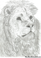 Lion realism by Huskieee