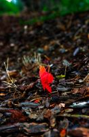 One red leaf by Mackingster