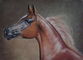 Portrait Arabian Horse Head Pastel by PASTELIZATOR