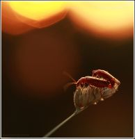 love in the sunset by Viand