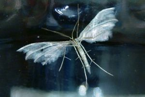 Moth with feather wings by gamebalance