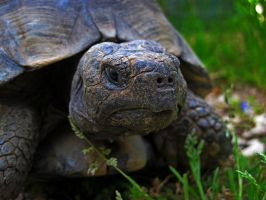 The turtle 2 by Daisydog8
