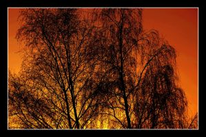 Lonesome trees 2 by garbo009