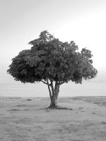 Paqueta's Tree by luiscds