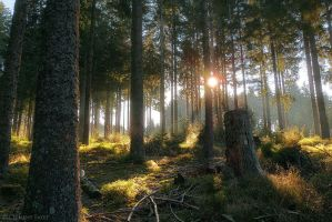 Raw Forest by LG77