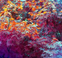 Colorfall by sumahli