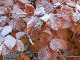 Frosty Autumn Leaves. by Mozisart