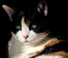 """The Calico"" by FlavoredWaters"