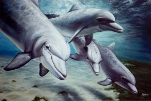 Dolphins by shambok
