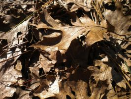 Texture: Dead Leaves 2 by Stock-By-Crystal
