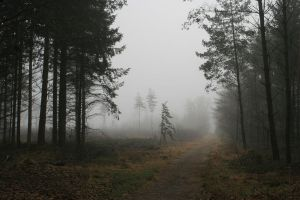 Misty moors road by Dewfooter