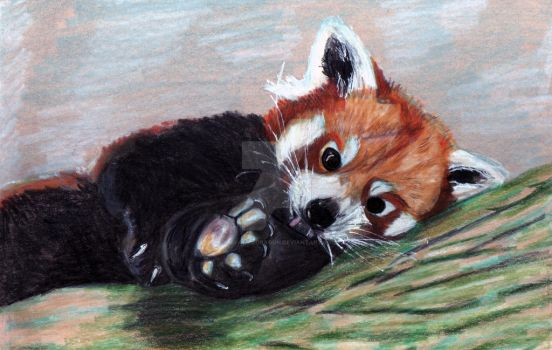 Red Panda by thefaeriedragon