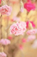 .::Soft and Delicate::. by teresastreasures72