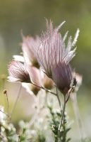 Apache Plume by Monkeystyle3000