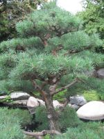 The Zoo: Bonsai by en-visioned