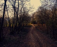 Forest path stock by FrantisekSpurny