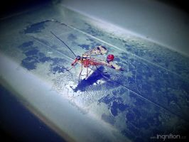 Summer Flower + Beetle 2012 - 31 by Ingnition