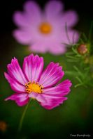 Cosmos III by WindyLife