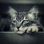 Pensive by ChristineAmat