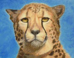 Cheetah Gaze by joanna--banana