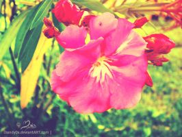 oleander by Mandy0x