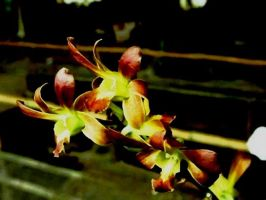 Orchids1 by gombloh75