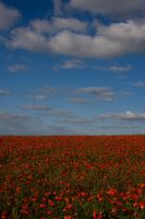 poppies3 by mo-guy