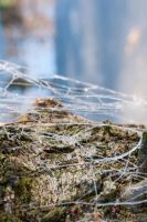 Frozen spider web by AndreaMetallurgico