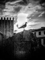 Seagull by Torkhelle