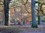Tree 53 - autumn in the forest by Momotte2stocks