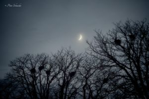 Soon, remains, just only the moon. by Phototubby