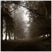 deep in the woods by Schroedi