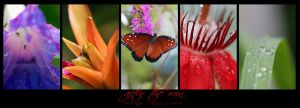 Photo - Queen Butterfly by emailandthings