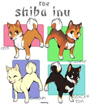the Shiba Beeba by thekitty
