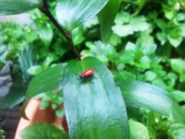 lily beetle by GrafixGirlIreland