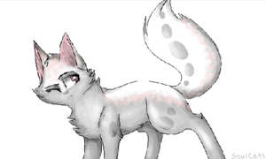 cat :3 by SoulCats