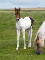 Moorland Foal 3 by The-strawberry-tree