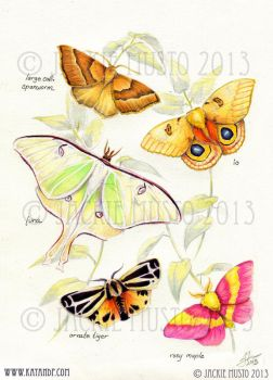 Moths by Jackie-M-Illustrator