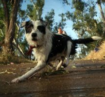 Doggies at the River 024 by aussiegal7