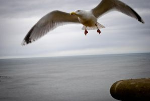 Seagull by karlitos-nightmare