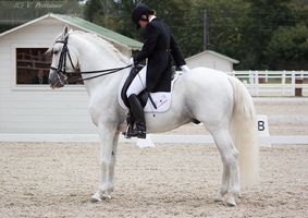 Dressage Cup_173 by CalyHoney