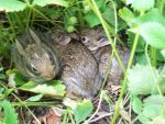 Baby Bunnies by AAAPhotography