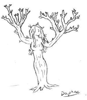 Daphne - Nymph Tree