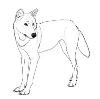 Eurasian Wolf Lineart by dogboy09