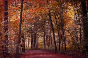 Forest by Lodchen-Photography