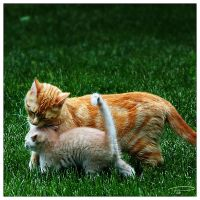 Motherly Love by Photo-Cap