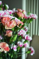 pink and orange carnations by cazzle86